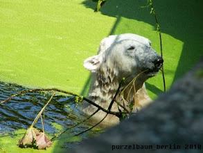 Photo: Spielfreudiger Knut :-)