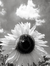 Photo: Black and white photo of a sunflower and cloud at Cox Arboretum and Gardens of the Five Rivers Metroparks in Dayton, Ohio.