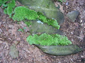 Photo: Mossy rocks