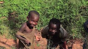 Rwanda -- In Search of Chimpanzees thumbnail