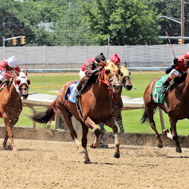 Down the stretch by Paul S. DeGarmo - Sports & Fitness Other Sports ( running, line, finish, down, horses,  )