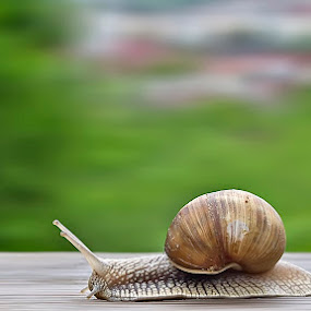 Speeding by Ionut Stoica - Animals Other ( macro, snail, motion blur )