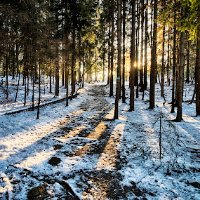 Morning in the forest by Morten Gustavsen - Landscapes Forests