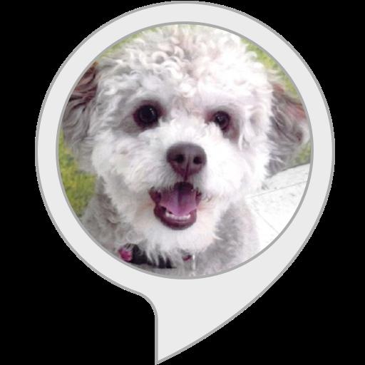 Jurassic Bark Alexa Skill Icon