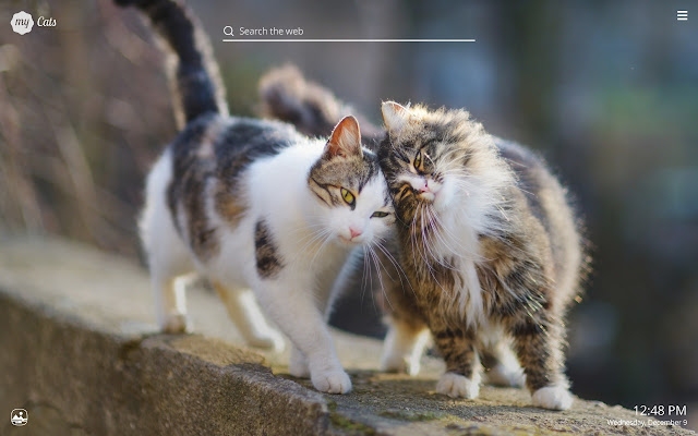 My cats adorable cat kitten wallpapers chrome web store altavistaventures Image collections