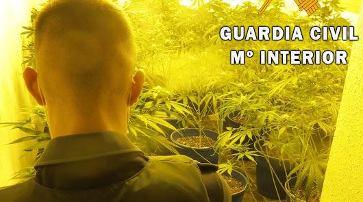 Detienen a dos parejas de Adra con 7 kilos de marihuana y varias plantaciones