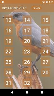 Ptačí Zvuky a vyzvánění - náhled