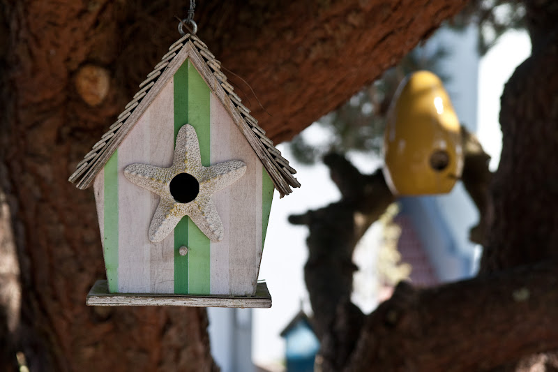 Photo: The current #urbansnap theme is Little Houses  Here are some little houses for Birds found in San Francisco.  +Urban Snapis a photography game with a weekly changing theme hosted by me and +Kristine Ward
