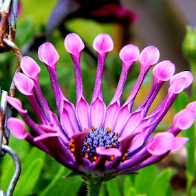 by Liz Hahn - Flowers Flower Gardens (  )