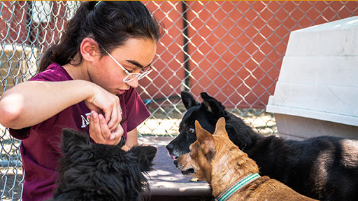 We Care Animal Rescue