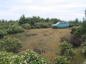 Photo: Ob der Panda-Fahrer auch zum Telefonieren in die Büsche gegangen ist?