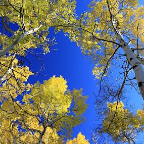 by Ron Harper - Landscapes Forests