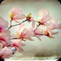Magnolia Live Wallpaper icon