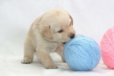 D:\БИЗНЕС\ДИМА\Картинки для подготовки дома для собаки\puppy and balls.jpg