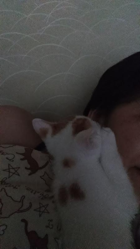 うるさい 猫 ゴロゴロ