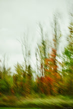 "Photo: Blurstract 4J4 4.124  ""Everyone must take time to sit and watch the leaves turn."" {Elizabeth Lawrence}  Drive by going south. I-90"