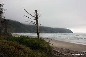 Photo: (Year 2) Day 348 - The Beach at Cape Lookout