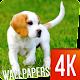 Puppies Wallpapers 4K