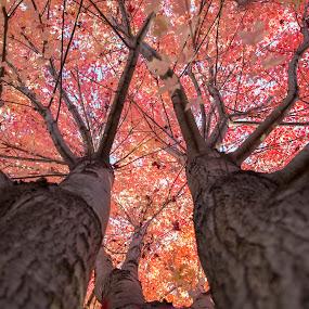 by Rajib Bahar - Nature Up Close Trees & Bushes (  )