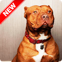 Pitbull Wallpapers icon