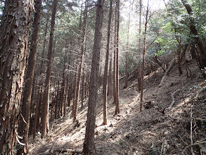 右斜面は植林帯