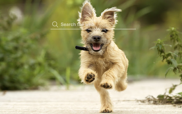 Cairn Terriers HD Wallpapers Dog Theme