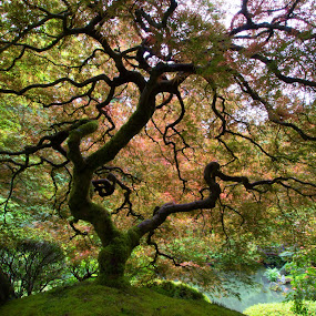 Japanese Gardens by Stephen Berry - Landscapes Forests ( tree )