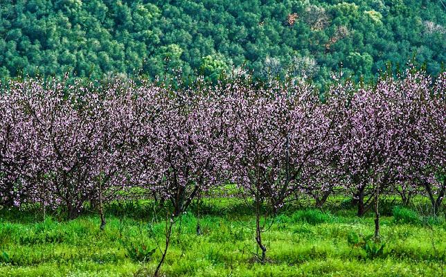 geometrie di primavera di lorenzo.malevolti.14