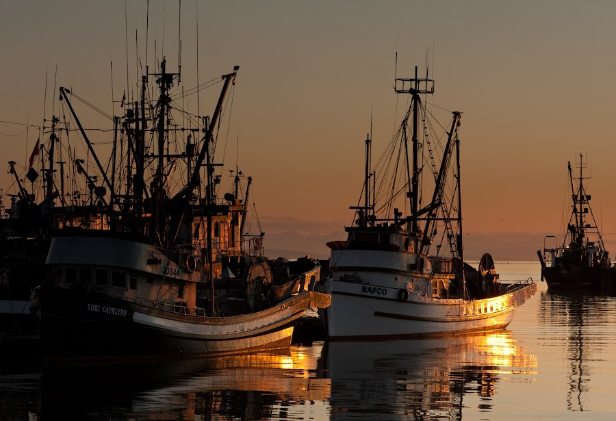 Steveston Sunset by Tanya Witzel - Transportation Boats ( canon, water, reflection, canada, sunset, magic hour, lake, ocean, transportation, boat, bc, golden hour )