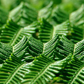 Mystery of fern leaves by René Wright - Nature Up Close Leaves & Grasses ( close up, leaves, fern,  )