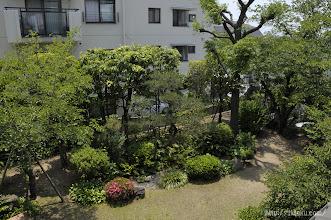 Photo: 作品中に登場している庭木が可能な限り再現されている。ちなみに倚松庵の南西隣には当時、