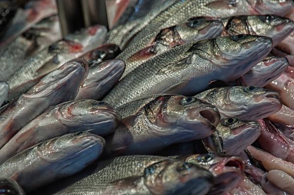 Pesce fresco di Gian Piero Bacchetta