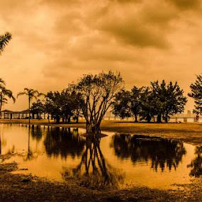 Wet park by Jaguar Ricko - Landscapes Waterscapes ( park )