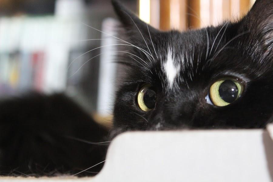 by Sheilla Johnson - Animals - Cats Playing