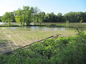 Photo: Day 67 - Field Submerged