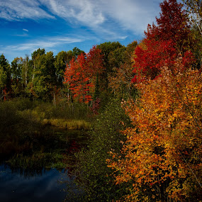 Tree lined pond NE Wisconsin Fall 2018 by Michael Haagen - Landscapes Forests ( pond, blue sky, fall colors, fall, tree,  )