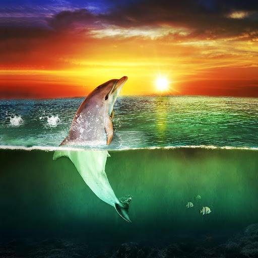 바다 돌고래 라이브 배경 화면