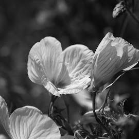 Flowers by Brenda Shoemake - Black & White Flowers & Plants (  )