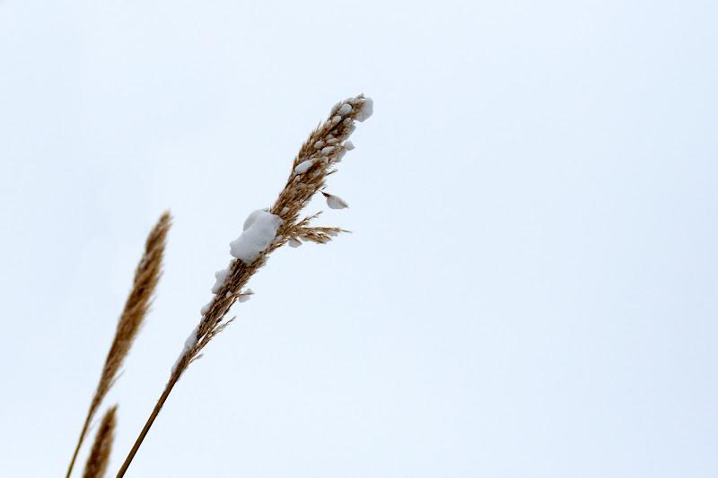 Ultima neve di primavera di Nicola Serena