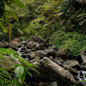 Costa Rican Rain Forest by Jeff Dugan - Landscapes Forests ( stream, jungle, greenery, low light, rainforest )