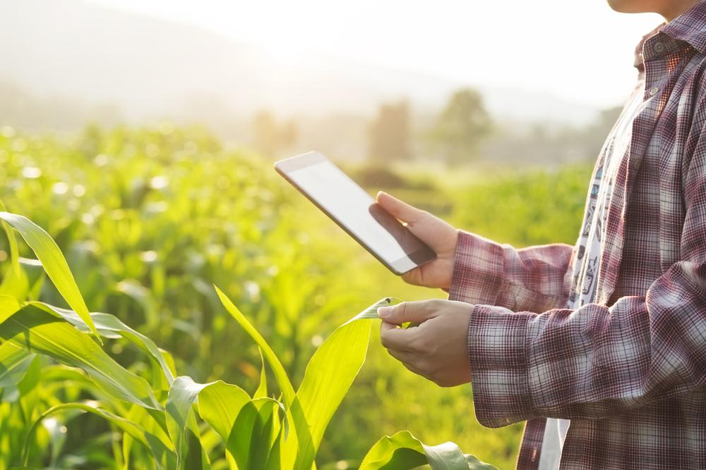 Implantação de novas tecnologias no ambiente da agricultura familiar é um desafio para 2021. (Fonte: Shutterstock)
