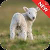 Guider Goat Simulator