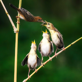 Gimme...Gimme by Miko Adji - Animals Birds ( nature, mother, family, outdoor, gathering, eating, children, morning, birds,  )
