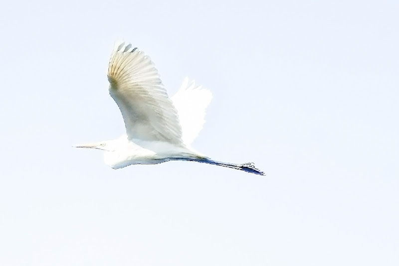 Air One di acquario