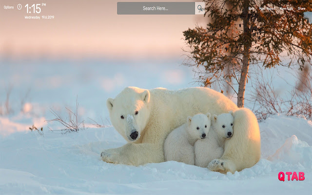 Polar Bear Wallpapers HD Theme