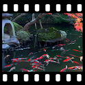 Japanese Pond with Koi Video Wallpaper icon