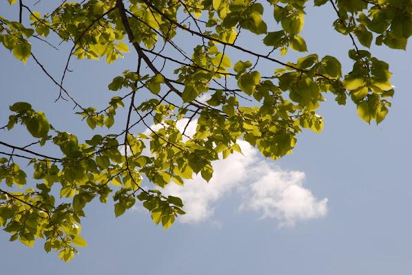 Nuvola e foglie di @7516cc