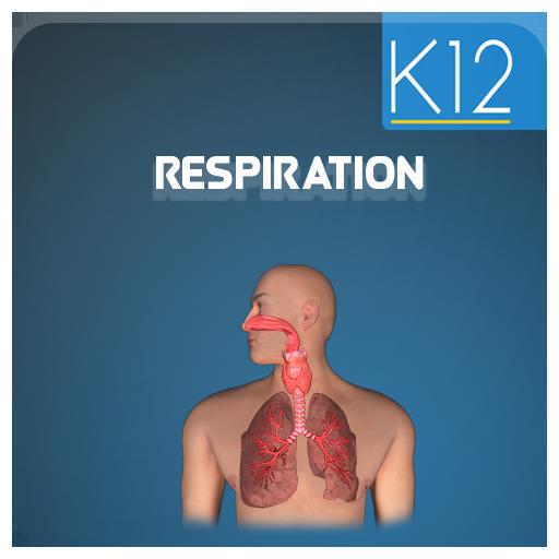 Cellular Respiration Process (app)