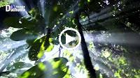 Rừng Chưa Thay Lá – Như Quỳnh