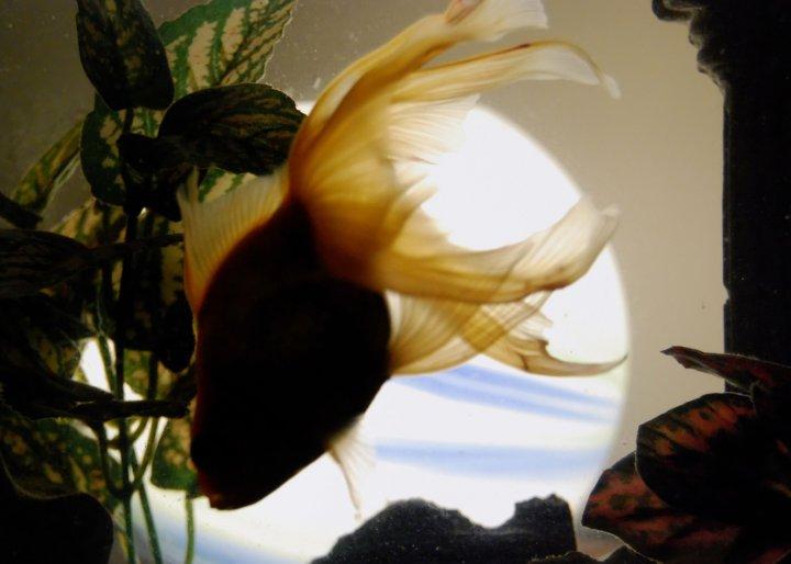 All'ombra del pesce di lsguotti